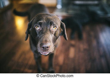 Dog with personality - Dog sitting on the floor in the...