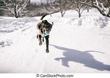 Winter fun - Dog is playing in the snow and is having fun