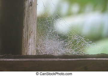 cobweb or spider web abstract background in nature