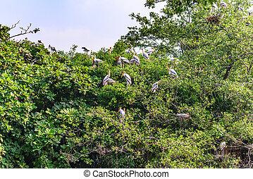 Milky stork, birds resting on tree after raining.