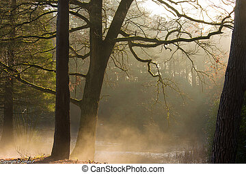Forest sun rays and low fog from the nearby water on a...