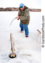 Man Pulling a Big Pike From Under the Ice - A man is pulling...