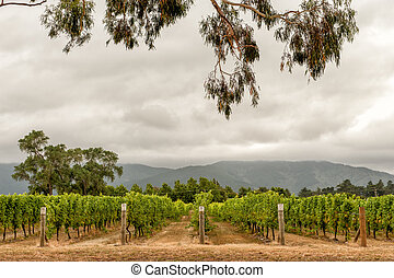 Marlborough wine country, NZ - Marlborough wine country near...