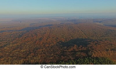 Aerial view of the forest. sunset HD