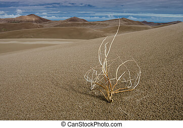 Withered in the Desert Color - A tumbleweed in front of a...