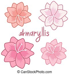 Cute amaryllis set, colorful hippeastrum collection, gentle...
