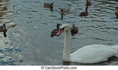 Mother with her son feeding swans and ducks