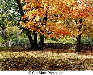 Golden Red Oak         - Autumn in Minnesota