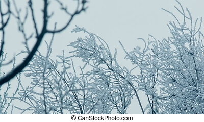 Frozen Top Of a Trees - frozen branches of a tree in winter
