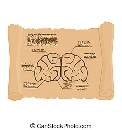 Brain of old scroll Drawing Old brain Diagram Archaic human...