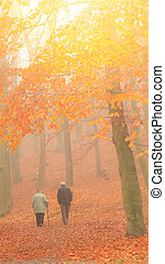 senior couple walking in autumn forest - Rear view of senior...