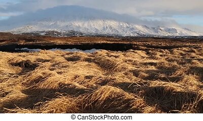 Yellow grass field - An Iceland field with yellow grass on...