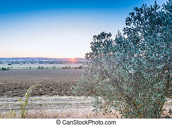 Sunset in the Tuscan land - Sunset in the splendid Tuscan...