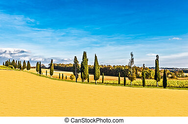 countryside of Lucignano in Tuscany - The plant and the...