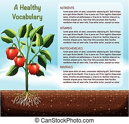 Capsicum plant and text design illustration