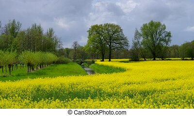 East Frisians rape field
