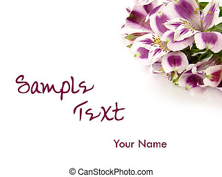 White and Purple Alstroemeria flower card background - White...