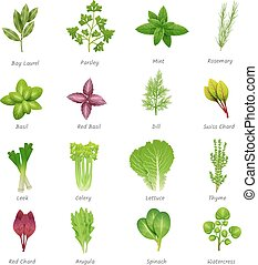 Herbs Icons Set - Icons set of different special herbs wich...