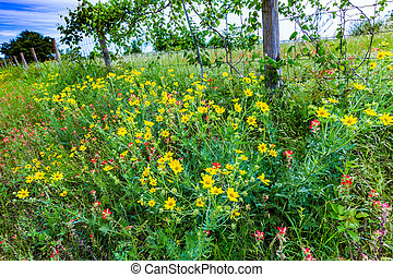 A Wide Variety of Texas Wildflowers - A Field of Various...