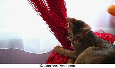 Cat Chews Curtain - cat pulls curtain and hostess punishes...