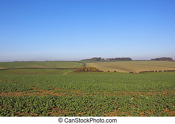 scenic agriculture - a young canola crop on chalky soil in...
