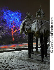 city at night. garland lights. palm tree in the snow