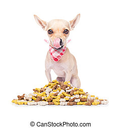 hungry dog - hungry chihuahua dog beside a big mound or...