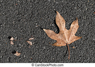 Star leaf on black floor - Five star brown leaf drop on the...