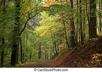 Trail through autumn forest - Trail through the woods in...