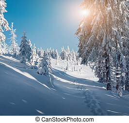 Small fir tree covered fresh snow in the winter mountains....