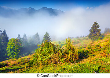 Misty summer morning in the Triglav national park, near the...
