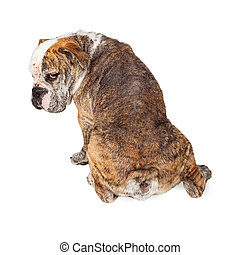 Backside of Dog With Mange