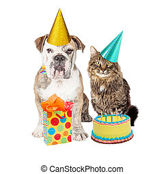 Birthday Party Cat and Dog Wearing Hats