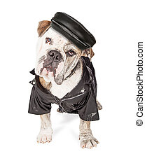 Funny Biker Bad Bulldog Breed Dog - Funny photo of a large...