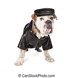 Funny Bulldog Breed Security Dog - Funny photo of a Bulldog...