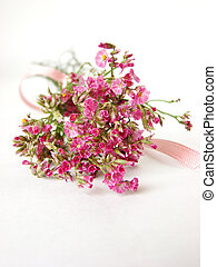 Bouquet of little pink flowers on white background -...