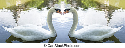 swans - Twin Swan Lake; love concept ; couple concept