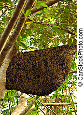 Large Bees Nest hanging From Tree Limb Covered with Bees -...