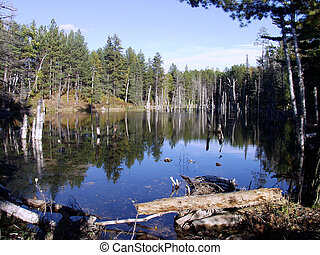 Beaver Dam in Northern Minnesota - Northern Minnesota...