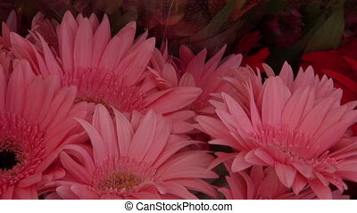 Gerberas and other flowers - Pink and red gerberas and other...