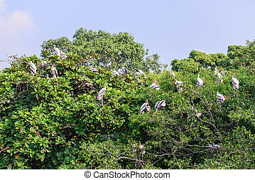 Milky stork, birds resting on tree after raining