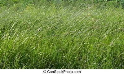 Texture of grass on wind