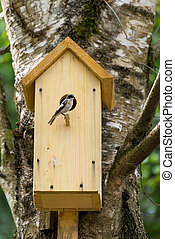 Bird on nest box - Sngle bird on nest box Nesting box is...