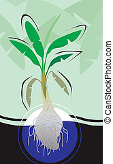 Banana tree - Illustration of a banana tree with cross...