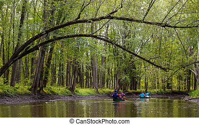 friends canoeing through dense forest - paddling canoes down...