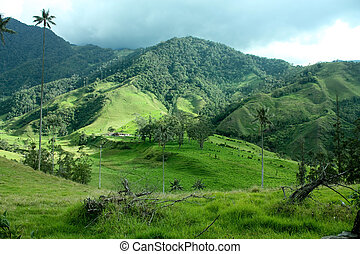Cocora valley and the palm - Cocora Valley, one of the most...