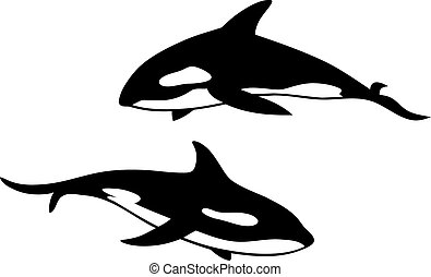 Killer whale - Abstract vector illustration of killler whale