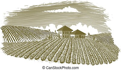 Woodcut Vineyard Landscape - Woodcut-style illustration of a...