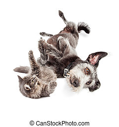 Playful Cat and Dog Rolling Around Together - Cute terrier...