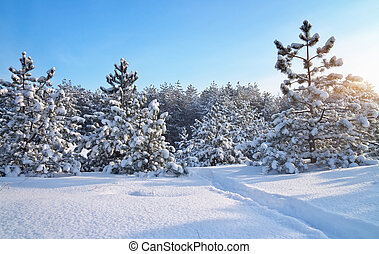 Winter landscape Composition of nature Winter landscape with...